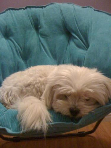 Princess home pet euthanasia of southern california princess giang solutioingenieria Choice Image