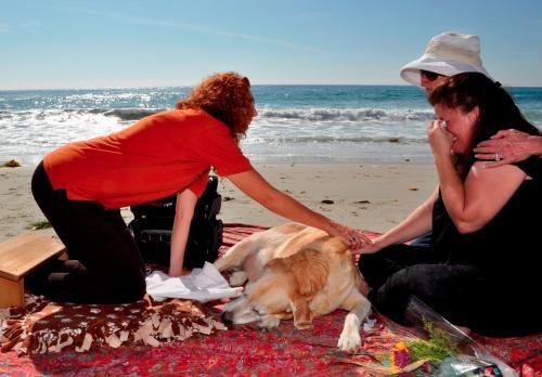dog euthanasia home pet euthanasia of southern california